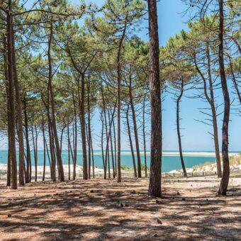 Les pins qui bordent la maison de vacances, un moment de détente entre amis et une bouteille de Mimbeau à partager.